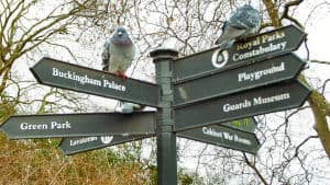 Street sign in London with Pigeons